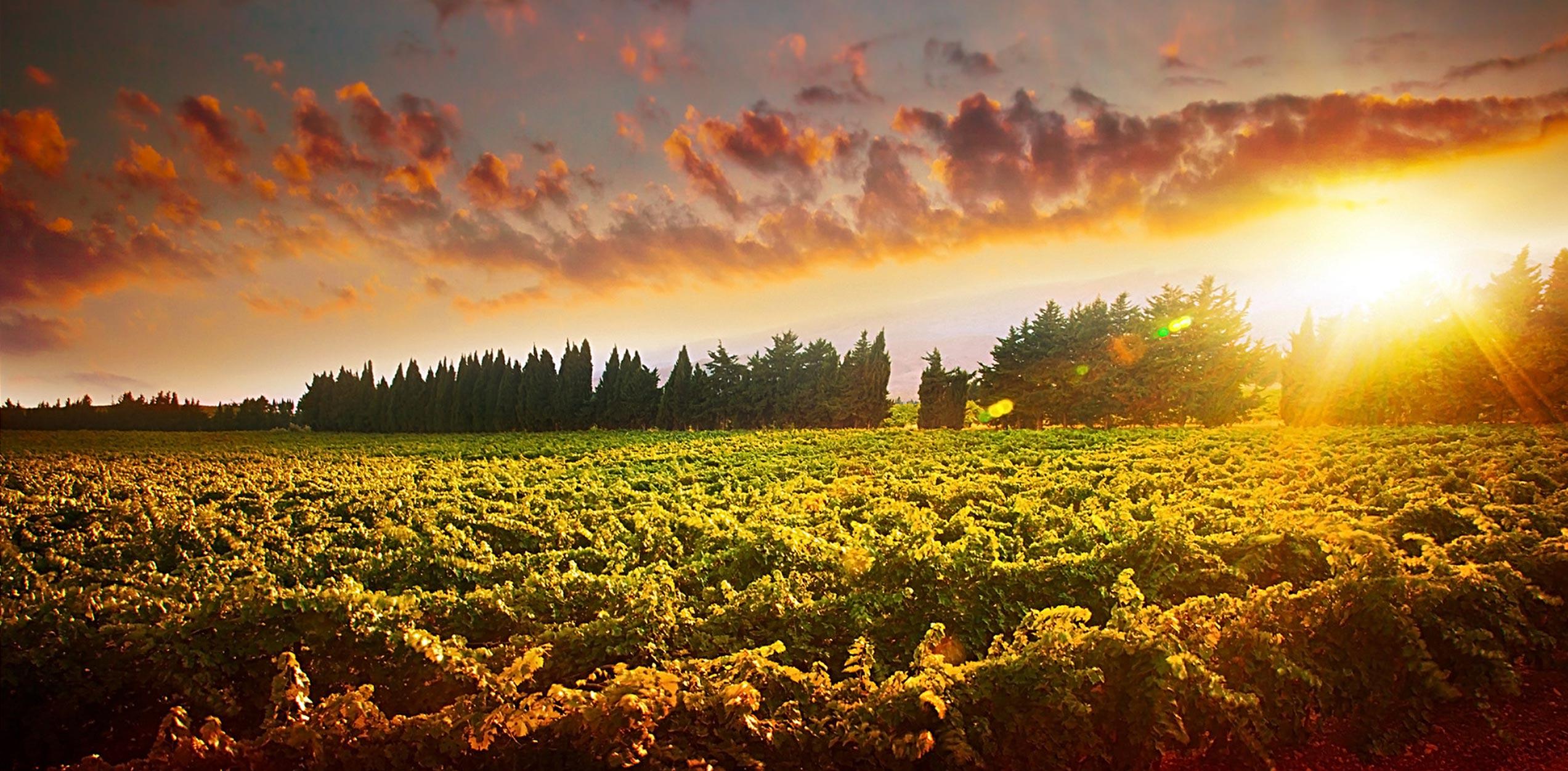 Bodegas Ibaiondo Rioja